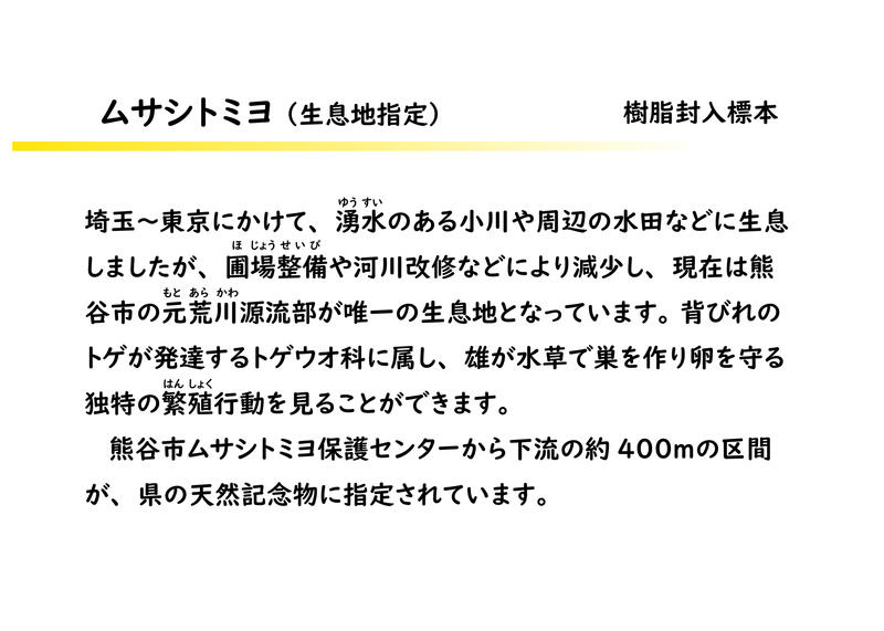 ムサシトミヨ解説