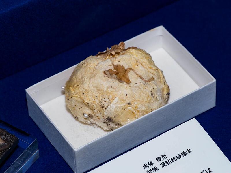 モリアオガエル卵泡