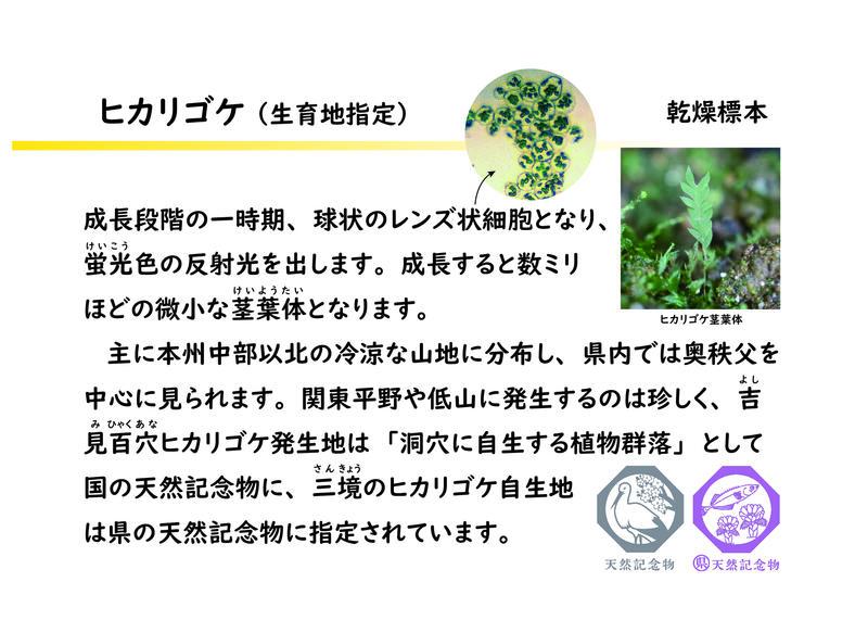 ヒカリゴケ解説