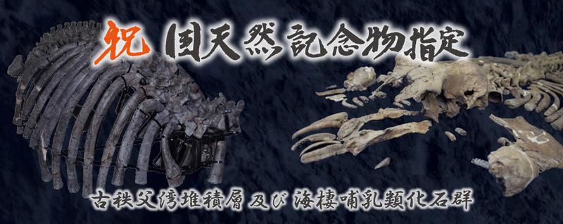 祝国天然記念物「古秩父湾堆積層及び海棲哺乳類化石群」